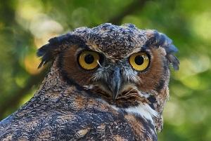 Animal Ambassadors will visit FDLPL virtually in January