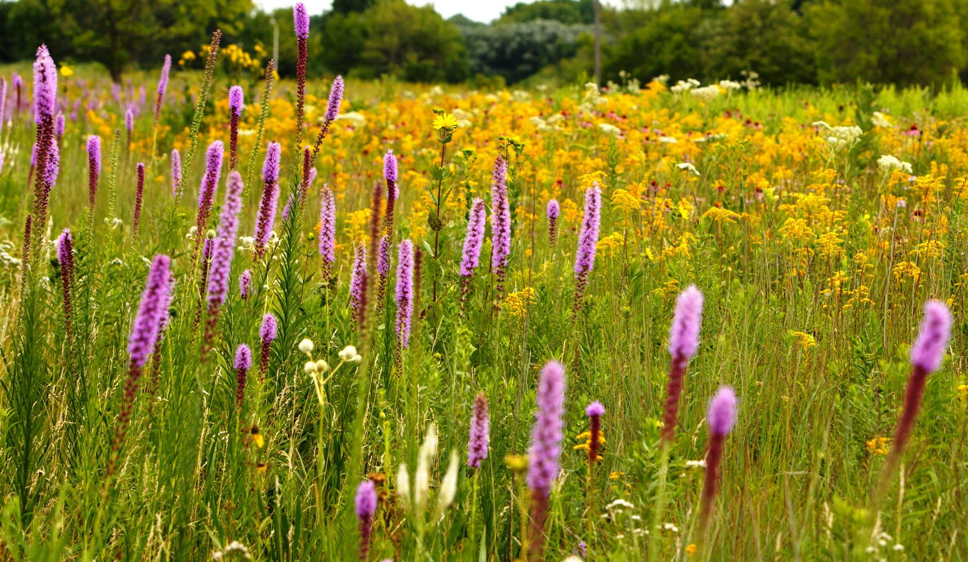 Prairie ecosystems, Gottfried history talk Jul 10